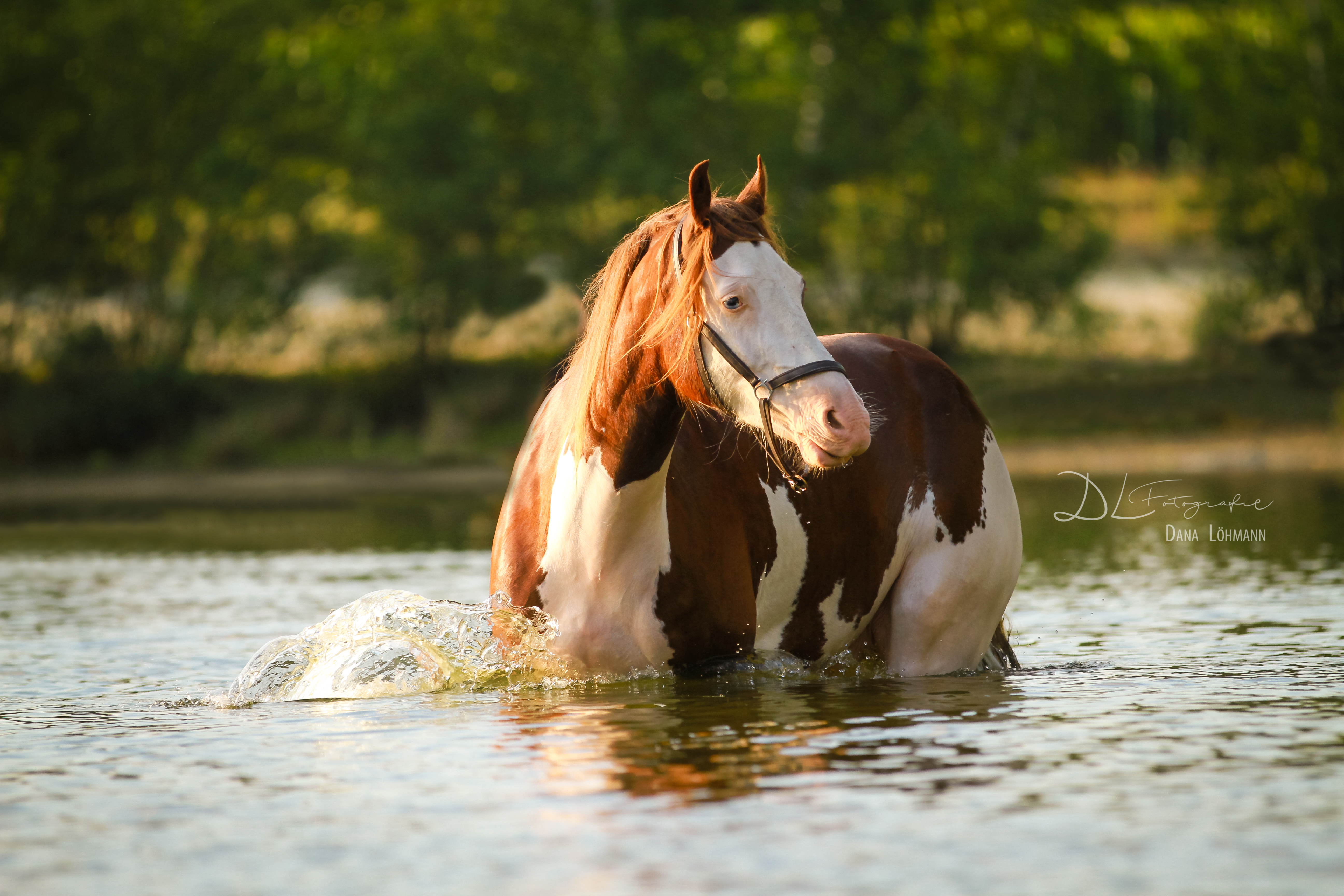 pferde wasser winter